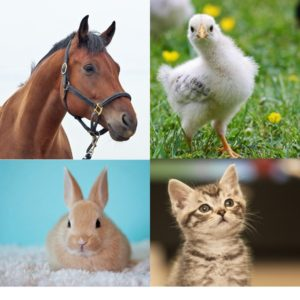 Collage of pictures of a horse, a baby chick, a rabbit, and a kitten