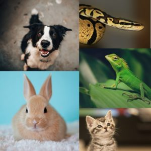 dog rabbit snake lizard cat